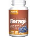 Borage 1200 mg