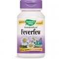 Feverfew